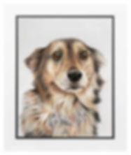 dogmount.jpg