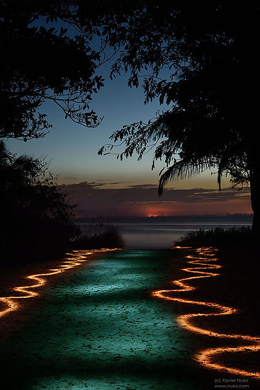 A magical light path glowing at night leading to water with trees in silhouette by artist Xavier Nuez