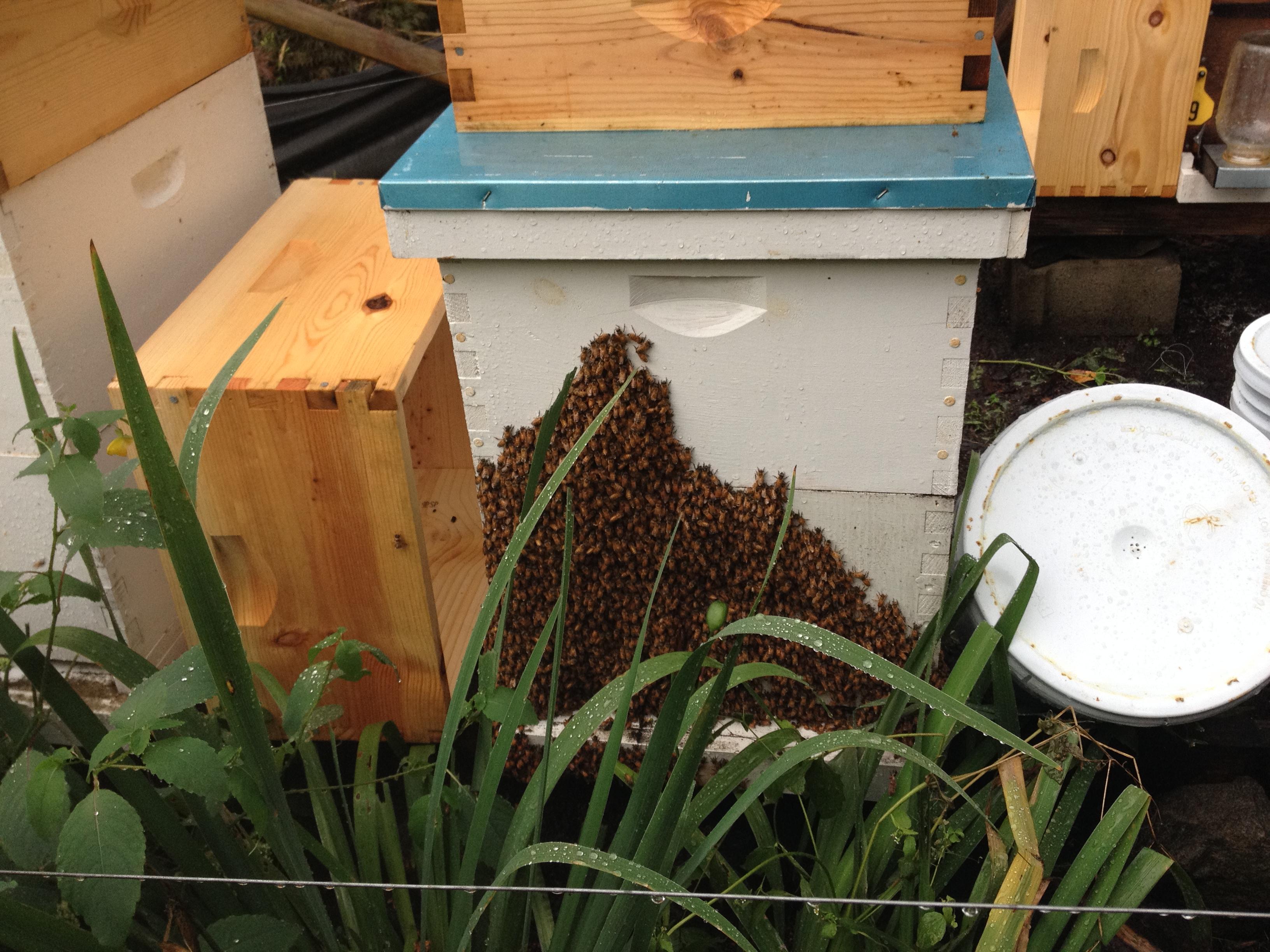 Swarm Removal 6