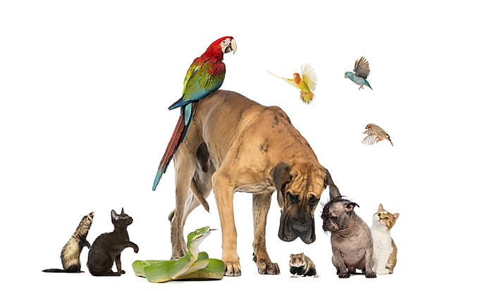 Group of pets on white.jpg