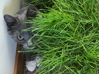 Happy Cats ~ Try Cat Grass
