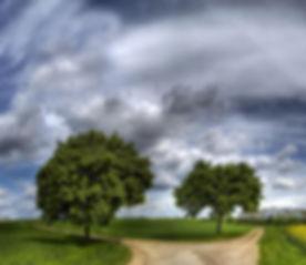 TwoRoads&Trees.jpg