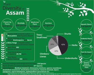 Plant diversity of Assam