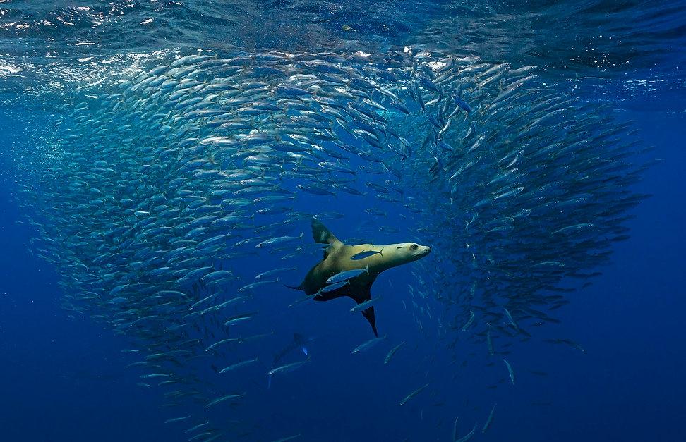 sea lion_DSC9603.jpg