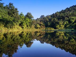 Invasive Species Threatens the Fringe Ecosystem of Amchang Wildlife Sanctuary