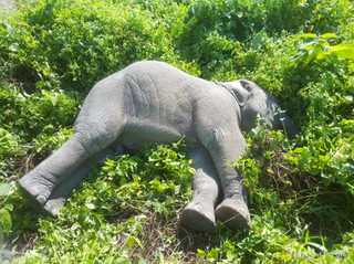 In the Heart of the Conflict: Understanding the Human Elephant Dynamics in Udalguri
