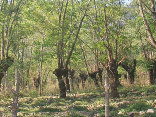 Building up carbon sinks in northeast India's shifting cultivation landscape
