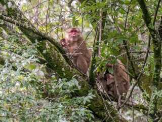 The Story Behind Finding a New Species of Primate in India