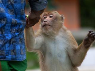 The Temple Macaques of Tukreswari