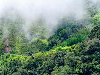 Sociological Insights into Human-Nature Relationship and Environmentalism in Northeast India