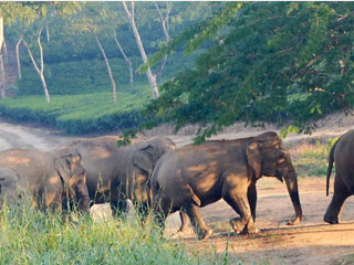 Ignored Barak Valley Grappling with Wildlife Conservation Issues