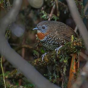 Bird Calls - To Communicate or Deceive?