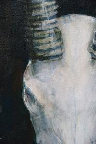Gemsbok Close-up