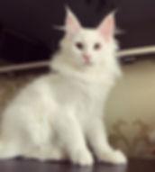 Esmeralda Rococot, 3,5 месяца 🌺 не прод