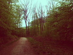 Kahlenberg Forest Walks.