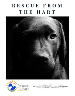 Rescue from the Hart
