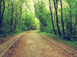 Trails.