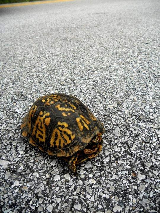 Saving Turtles.
