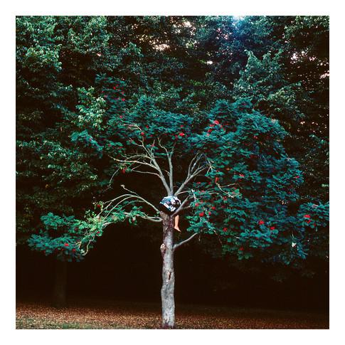 Exercise to climb a tree I