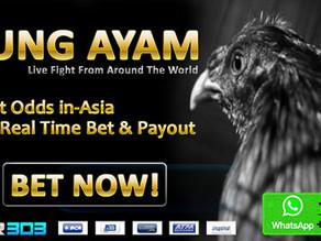 Sv388 Situs Adu Ayam Online Terbesar & Terpopuler Di Indonesia
