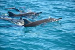 dolphin+swim.jpg