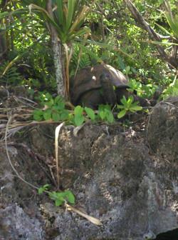 Tortoise ile aux aigrettes