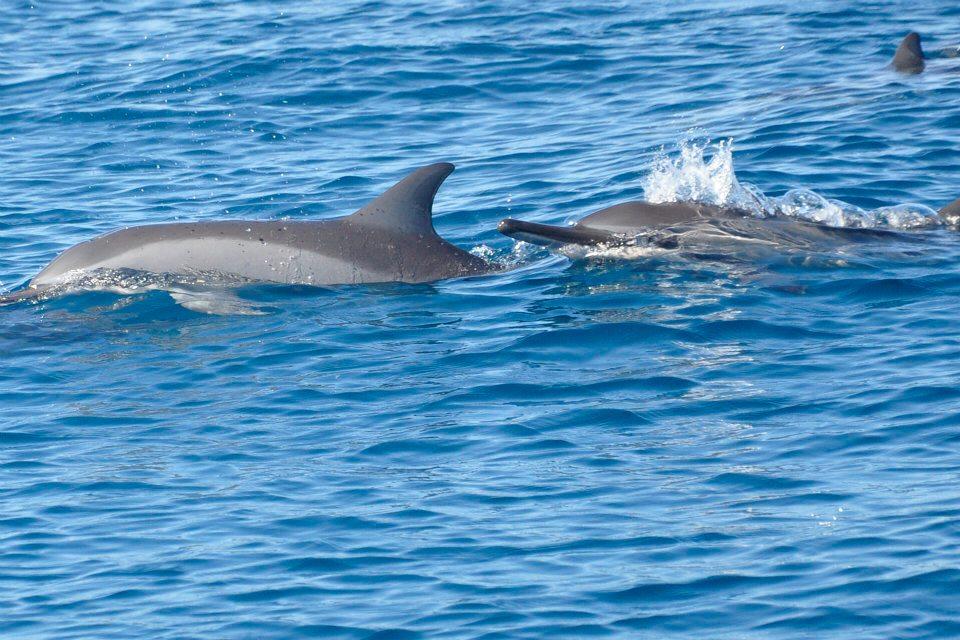 dolphin+friend.jpg