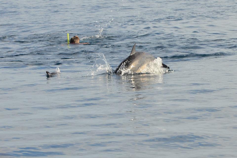 Swim+with+the+Dolphin.jpg