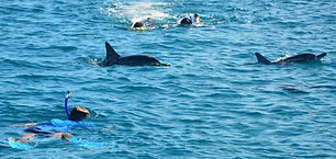 dolphins-swimming-full-day-benitiers-isl