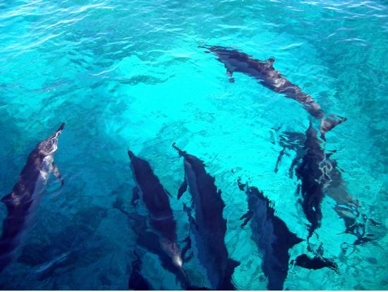 dolphin+swim+blue