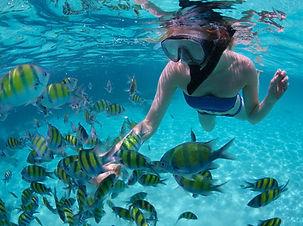 snorkeling-fish.jpg