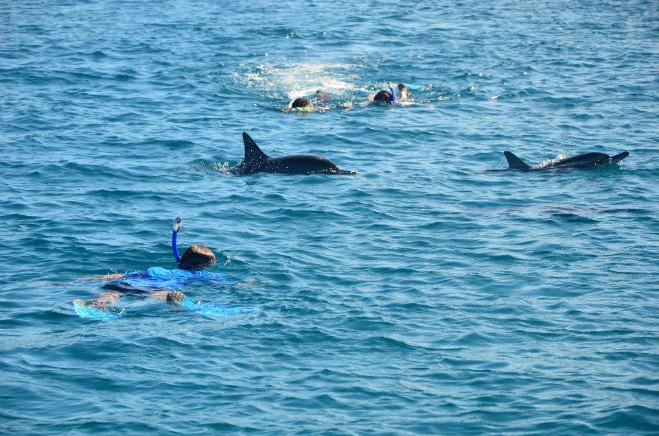 dolphin+swim+with.jpg