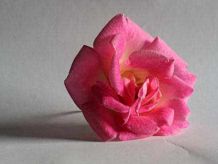 A Stark Pink