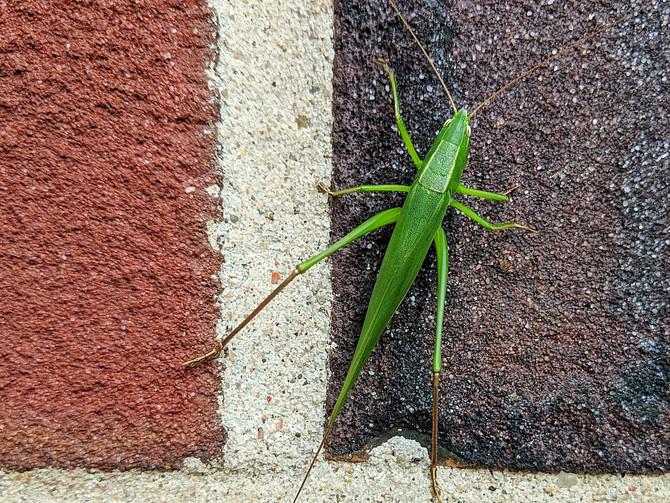 Grasshopper Chess