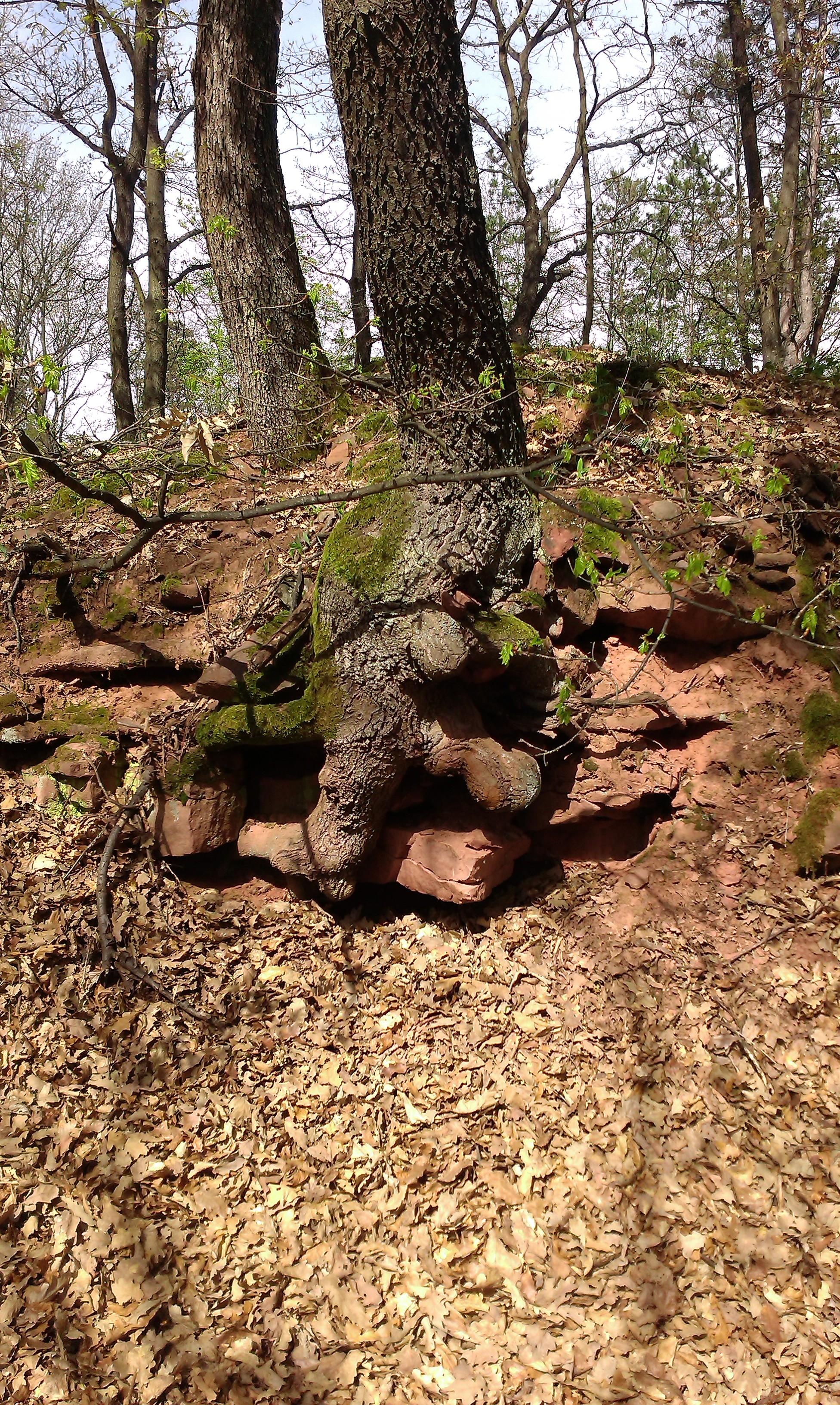 gyokerek kövek