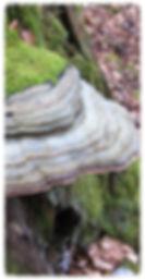 société mycologique contrôle de champignons jura