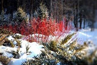red twig in the garden.jpg