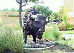 Bison-bronze-top-coat-Edit.jpg