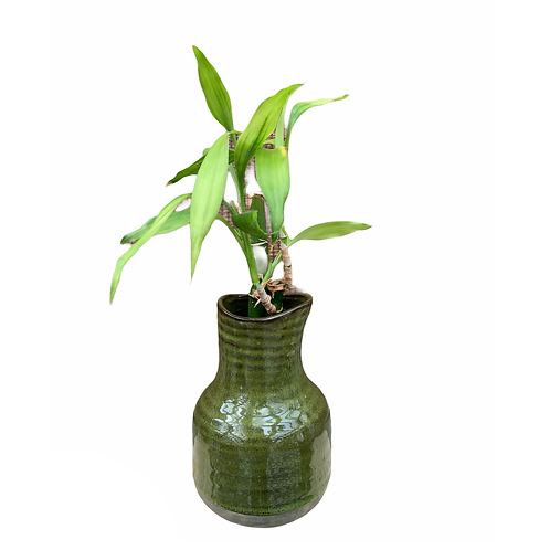 Lucky bamboo - Vintage Vase