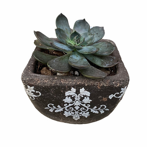 Succulent - Clay Pot