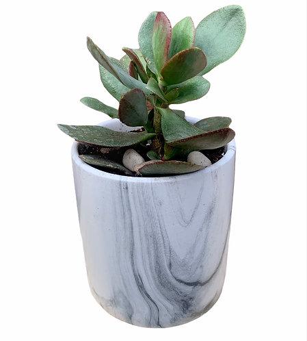 Succulent - Resin Pot