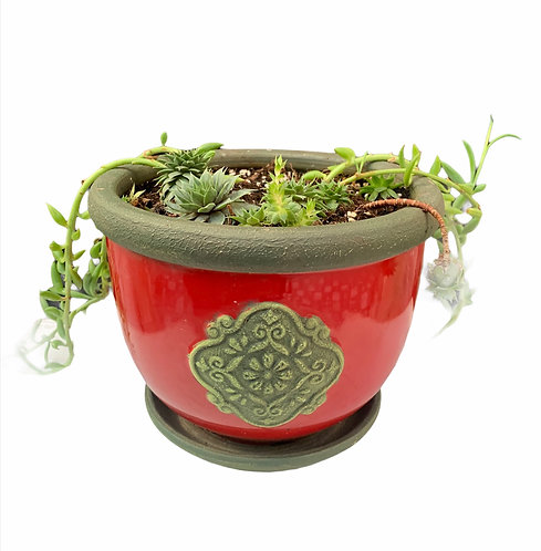 Succulents - Large Ceramic Pot