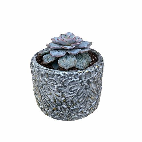 Succulent - Clay Pot