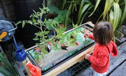Organic home grown food including herbs