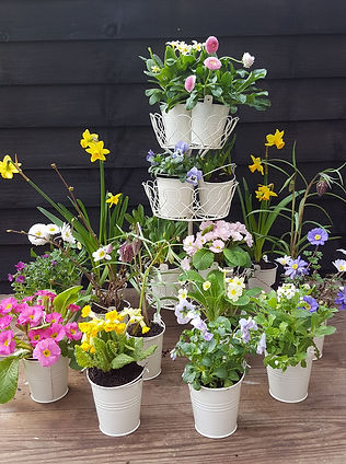 Array of small metallic planters with springtime flowers. Some displayed in a tiered arrnagement, some displayed on the table