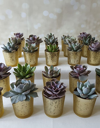 Small gold planters with succulents. Table deocrations and double up as Wedding Favours
