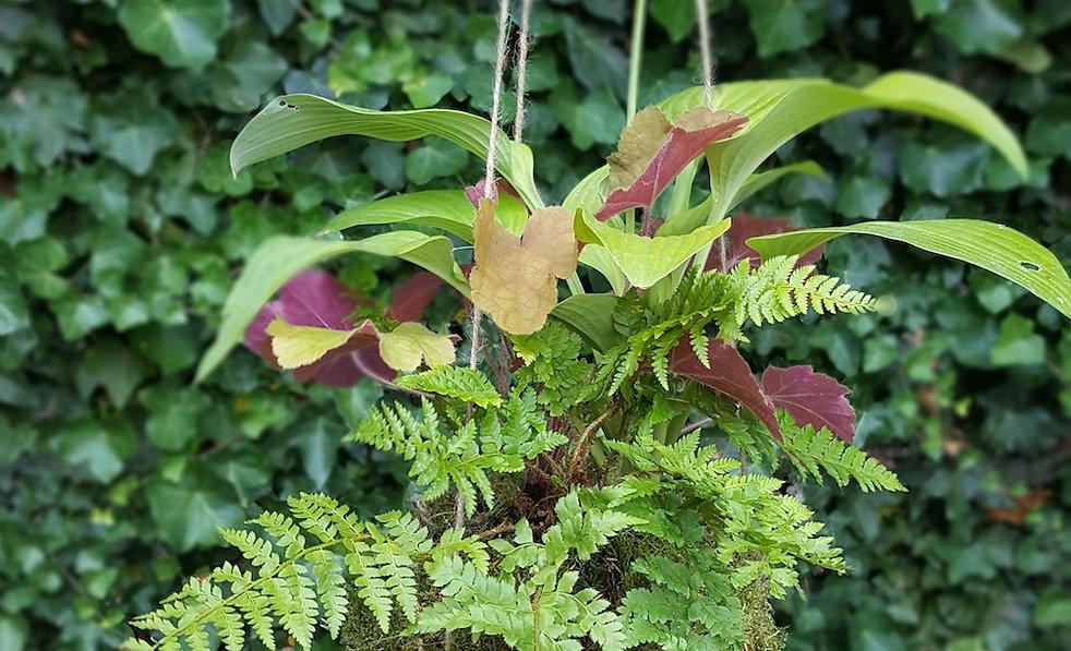 Kokedama/Japanese moss ball. Filled with semi shade loving ferns, heuchera and hostas