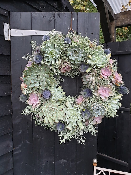 Christmas Living Wreath : Mixed Echeveria with Cut Cypress and Eryngium