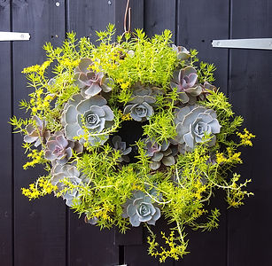 Succulent Wreath 'Lime'