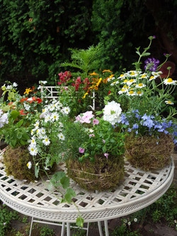A variety of colours and plants.